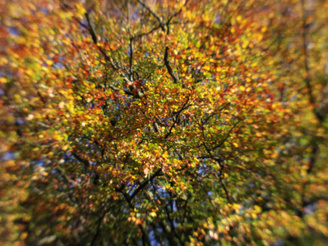 "Autumn Tree Colours - Only The Centre Of The Frame Approaches Any Semblance Of Sharpness | 1/160 sec | f/9.0 | 11.5 mm | ISO 200<br /><a target=""_blank"" href=""https://www.magezinepublishing.com/equipment/images/equipment/07-Mount-Shield-Lens-5194/highres/pentax_07_lens_autumn_tree_colours-Only-the-centre-of-the-frame-approaches-any-semblance-of-sharpness_1382628300.jpg"">High-Res</a>"