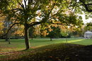 Trees | 1/320 sec | f/3.5 | 11.0 mm | ISO 200