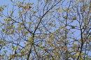 Spot the birds - 1/320 sec   f/5.6   110.0 mm   ISO 200
