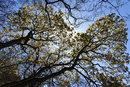 Trees | 1/1250 sec | f/4.5 | 10.0 mm | ISO 160