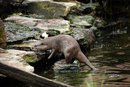 Otter | 1/800 sec | f/6.3 | 400.0 mm | ISO 1600