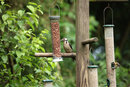 Woodpecker On Feeders | 1/1000 sec | f/6.3 | 400.0 mm | ISO 1600