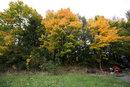 Autumn Colours | 1/25 sec | f/8.0 | 15.0 mm | ISO 100