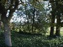 Trees | 1/125 sec | f/8 | 15.0 mm | ISO 640