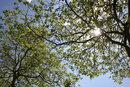 Into Sun | 1/250 sec | f/10.0 | 16.0 mm | ISO 100