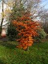 Autumn Colours 2 | 1/125 sec | f/8.0 | 16.0 mm | ISO 400