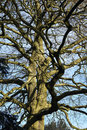 Ancient Boughs | 1/400 sec | f/5.6 | 44.0 mm | ISO 200