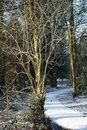 Winter Path | 1/160 sec | f/5.6 | 47.0 mm | ISO 200