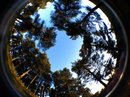 iPhone fisheye lens - trees