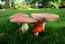 Close Up Fly Agaric F11 | 1/26 sec | 21.0 mm | ISO 200