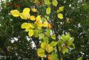 Backlit Leaves | 1/80 sec | f/8.0 | 70.0 mm | ISO 400