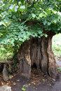 Hollow Tree | 1/80 sec | f/2.8 | 34.0 mm | ISO 400