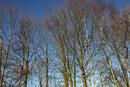 "1/800 sec | f/8.0 | 28.0 mm | ISO 400 | <a target=""_blank"" href=""https://www.magezinepublishing.com/equipment/images/equipment/28mm-f14-DG-HSM-Art-7020/highres/sigma_28mm_f14_art_winter_trees_1548167888.jpg"">High-Res</a>"