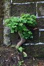 Small Tree | 1/20 sec | f/8.0 | 80.0 mm | ISO 200