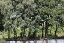 Sigma 50 100mm F1,8 Wetlands Landscape | 1/320 sec | f/5.6 | 50.0 mm | ISO 200