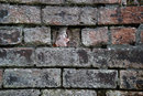 "Texture In Old Brick | 1/5 sec | f/8.0 | 56.0 mm | ISO 100 | <a target=""_blank"" href=""https://www.magezinepublishing.com/equipment/images/equipment/56mm-f14-DC-DN-C-7022/highres/sigma_56mm_f14_texture_in_old_brick_1543309801.jpg"">High-Res</a>"