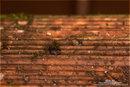 Venus Snail 01 100% | 1/200 sec | ISO 250