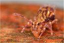 Venus Springtail 01 Nematodes Cropped | 1/250 sec | ISO 100