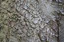 Texture In Tree Bark   1/6 sec   f/11.0   173.0 mm   ISO 200