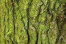 Gnarled Bark | 0.3 sec | f/11.0 | 70.0 mm | ISO 100