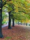 Trees   1/33 sec   f/2.2   6.3 mm   ISO 800