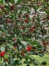 Berries   1/50 sec   f/1.6   4.8 mm   ISO 320