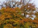 Leaves   1/100 sec   f/2.2   6.3 mm   ISO 125
