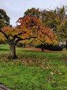 Tree   1/100 sec   f/1.6   4.8 mm   ISO 250