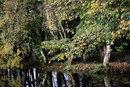 Wetland Landscape | 1/100 sec | f/8.0 | 85.0 mm | ISO 400