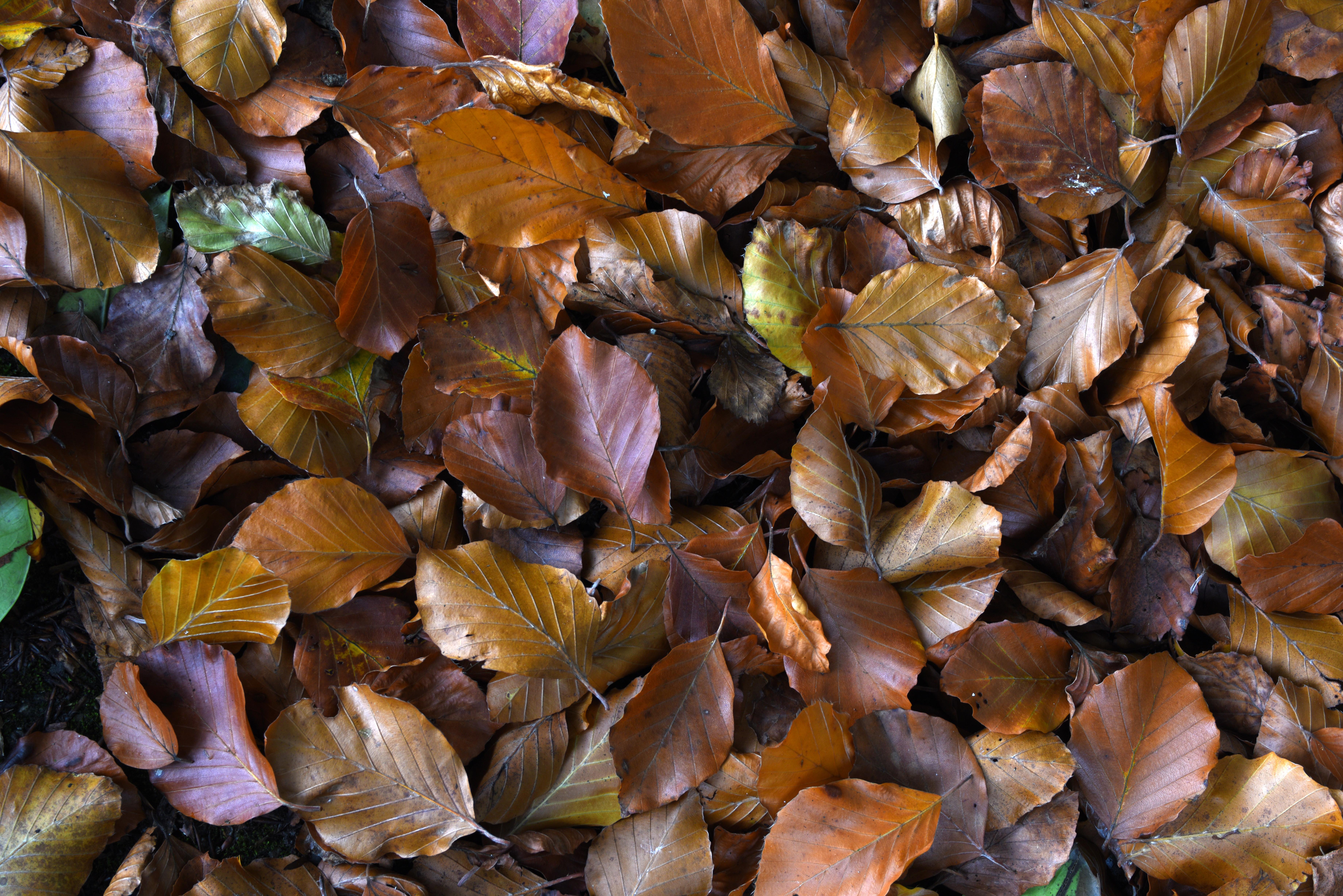 Meike 85mm F 28 Macro Review F28 Lens For Nikon Dslr Autumn Leaves At F8 1 13 Sec 20 1050 Mm Iso 100