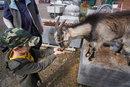 Feeding Billy | 1/50 sec | f/11.0 | 18.0 mm | ISO 200