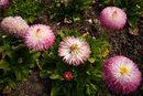Common Daisy | 1/320 sec | f/11.0 | 24.0 mm | ISO 200