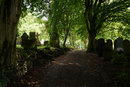 Graveyard Woodland | 1/50 sec | f/11.0 | 45.0 mm | ISO 400