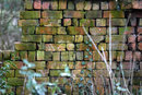 With TC Old Brick Boundary Wall | 1/40 sec | f/5.6 | 250.0 mm | ISO 400