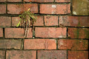 Old Brick | 1/500 sec | f/8.0 | 500.0 mm | ISO 200
