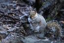 Squirrel | 1/1250 sec | f/5.6 | 500.0 mm | ISO 6400