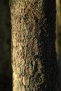 Tree | 1/640 sec | f/8.0 | 500.0 mm | ISO 400