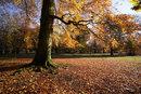 Autumn Parkland | 1/125 sec | f/8.0 | 18.0 mm | ISO 200