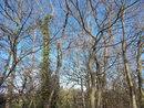 Trees   1/400 sec   f/3.2   4.6 mm   ISO 80