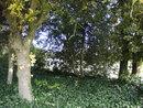 Trees   1/125 sec   f/2.0   6.0 mm   ISO 80