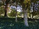 Trees   1/100 sec   f/3.3   5.2 mm   ISO 125