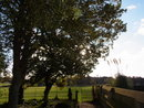 Sun through trees | 1/810 sec | f/3.5 | 4.9 mm | ISO 100