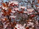 Blossom | 1/500 sec | f/4.5 | 13.0 mm | ISO 125