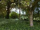 Trees   1/100 sec   f/3.2   4.6 mm   ISO 80