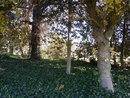 "Trees | 1/80 sec | f/3.5 | 5.0 mm | ISO 125 | <a target=""_blank"" href=""https://www.magezinepublishing.com/equipment/images/equipment/Coolpix-L610-4751/highres/nikon-coolpix-l610-trees_1352727978.jpg"">High-Res</a>"