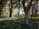 "Trees   1/250 sec   f/3.0   4.0 mm   ISO 125   <a target=""_blank"" href=""https://www.magezinepublishing.com/equipment/images/equipment/Coolpix-L820-5055/highres/nikon-coolpix-l820-trees_1367487597.jpg"">High-Res</a>"