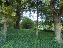 Trees   1/40 sec   f/3.2   4.6 mm   ISO 80