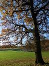 Autumn Tree   1/800 sec   f/3.3   4.5 mm   ISO 125