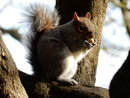 Squirrel | 1/125 sec | f/6.4 | 135.0 mm | ISO 250