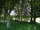 Trees | 1/125 sec | f/3.3 | 4.3 mm | ISO 100